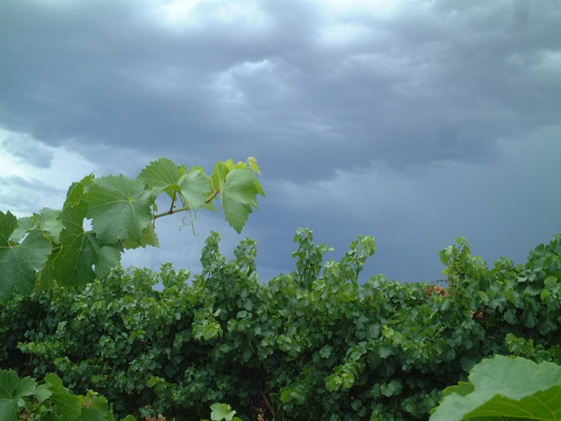 Biosecurity Business Case for Viticulture