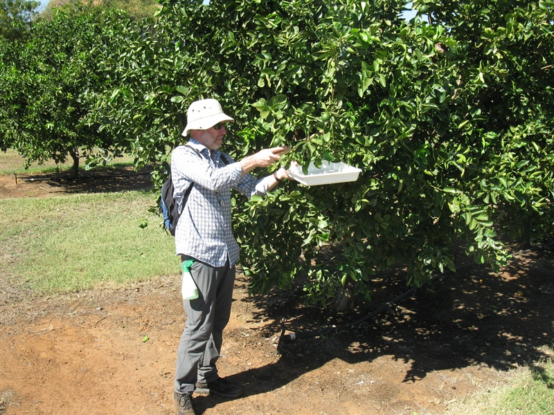 Citrus Biosecurity Project