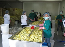 Processing of Peppers (Somborka) in Kosovo